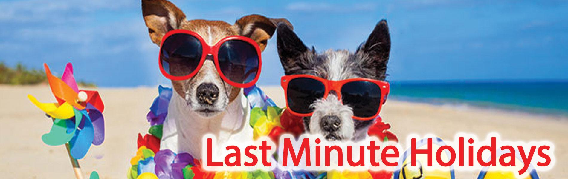 Dogs-Last-Min-holidays
